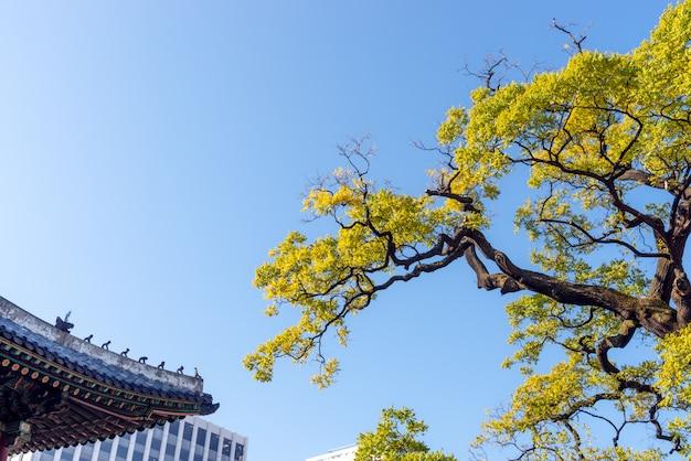 黄色い紅葉、伝統的な韓国の屋根、青い空とモダンな建物。
