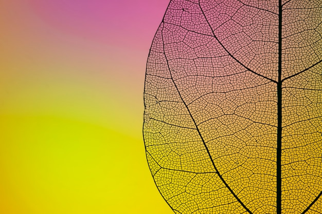 Yellow autumn leaf with copy space