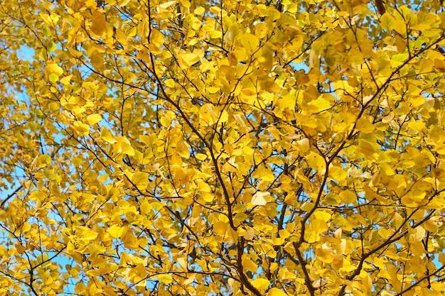 黄色の紅葉をクローズアップ