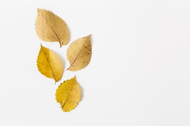노란색가 leaves.flat lay.space 텍스트입니다. 디자인을위한 템플릿입니다. 흰 배경. 미니멀리스트 스타일.