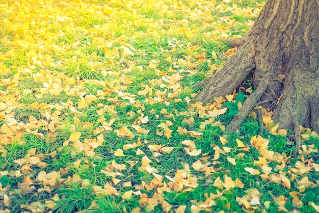 Yellow autumn  leaves on fresh spring green grass