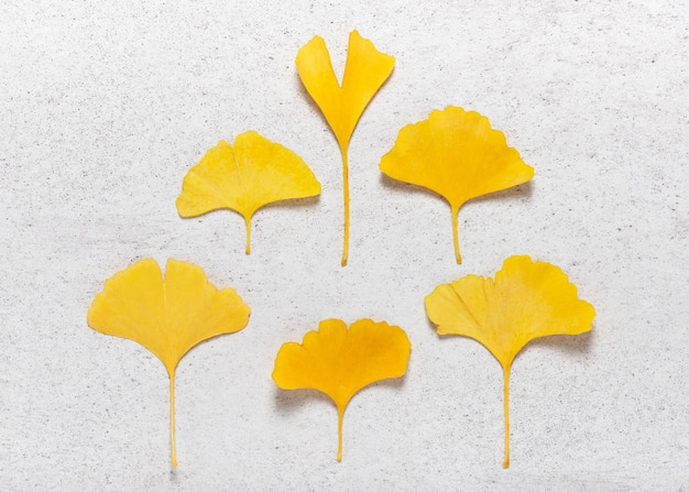 Yellow autumn leaves of ginkgo tree on the light stone background
