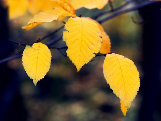 暗い背景の森の黄色い紅葉