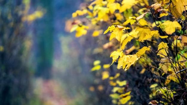 木の森の黄色い紅葉