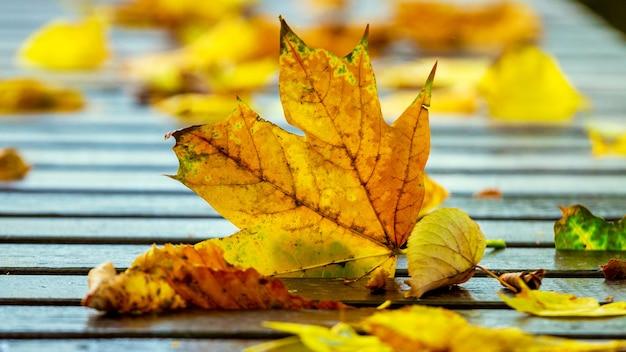 Желтые осенние листья на скамейке в парке в солнечную погоду