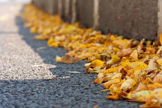 Желтые осенние листья на обочине асфальта в солнечный день