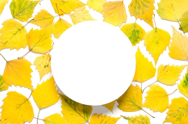 Yellow autumn leaves with a circle on white paper