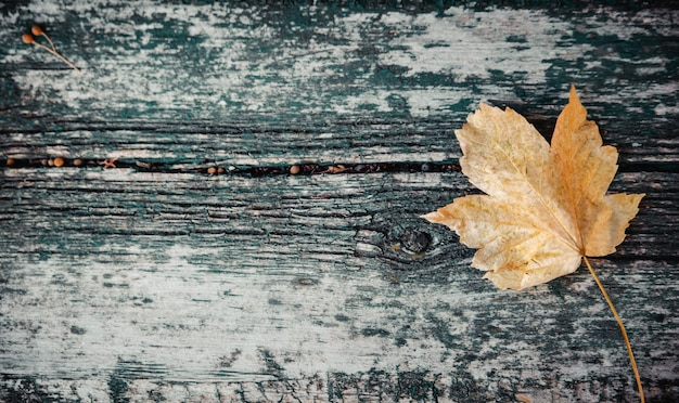 Yellow autumn maple leaf lies on an old wooden bench. copy space, top view.