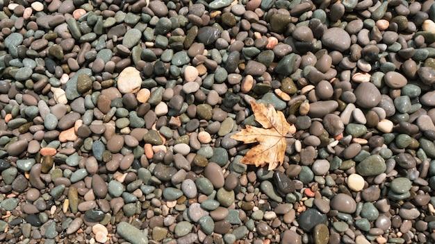 자갈 해변의 노란 가을 단풍잎 바다에도 가을이 오고 있다