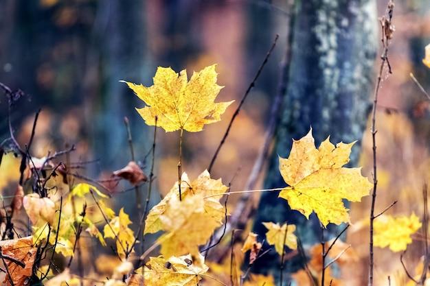森の中の黄色い紅葉