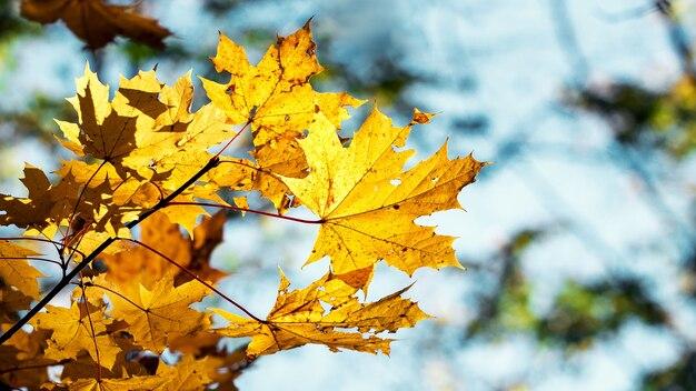 青空を背景に黄色い紅葉