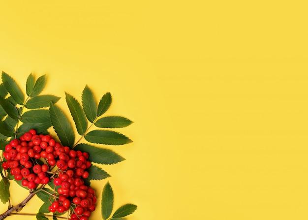 Желтый фон с кучей рябины с листьями