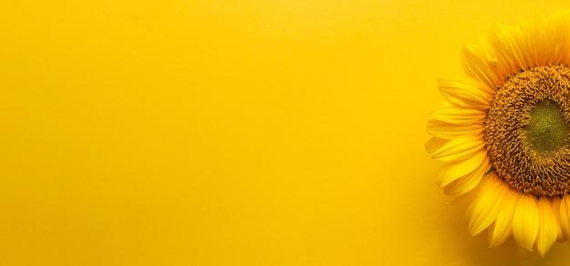 Желтый баннер с подсолнечником и копией пространства. место для текста, реклама подсолнечного масла
