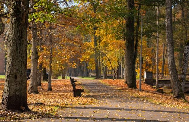 Yellow beautiful foliage autumn park