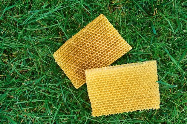 Yellow bee honeycombs lie on green grass, top view.