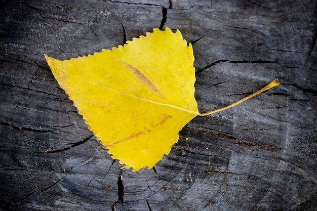 Лист желтой березы лежит на пне в лесу