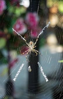 A yellow and black spider grabs and spins a cocoon of silk around her bumble bee prey