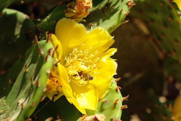 晴れた日に外の蜂と黄色の咲くサボテン