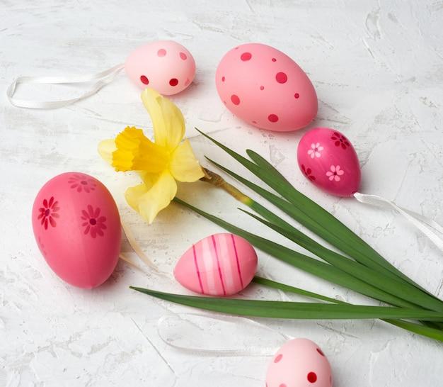 Желтый цветущий нарцисс и пасхальные розовые яйца на белом фоне