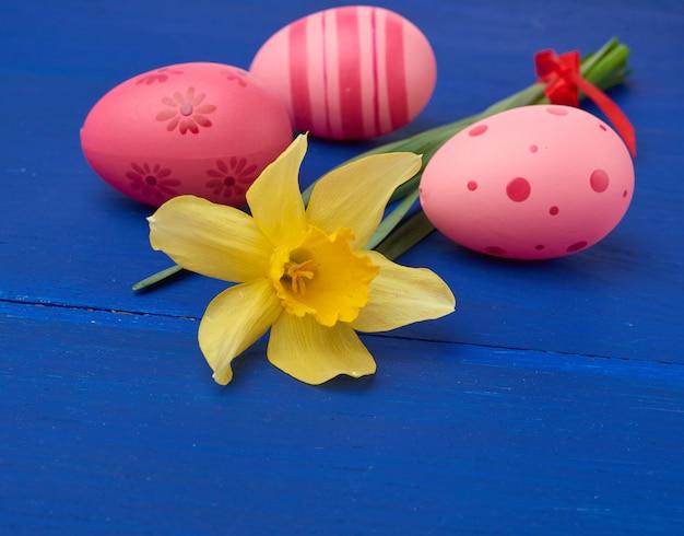 Желтый цветущий нарцисс и пасхальные розовые яйца на синем фоне деревянных