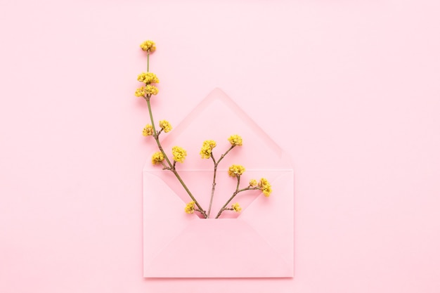 Yellow blossoming branches in pink envelope on pink background. hello spring concept. top view.