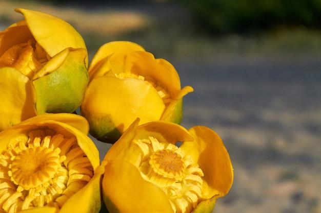 庭の選択的な焦点の黄色い花のチューリップの花