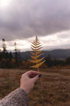 Желтая ветка папоротника в женской руке на фоне осенних гор концепция путешествия природы