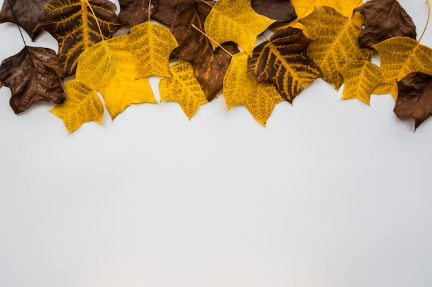 Yellow and brown leaves on white background