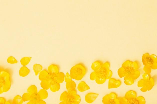 黄色の紙の背景に黄色のキンポウゲ