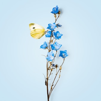 Yellow butterfly on blue flower. summer floral arrangement with campanula flowers on bright blue background
