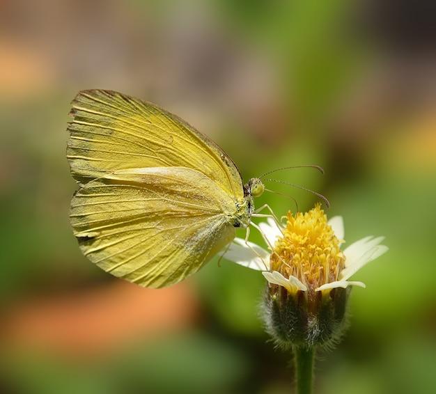 Желтая бабочка на цветке в саду