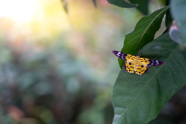 日の出に対して木の葉に黄色い蝶。