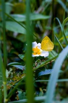 정글에서 흰 꽃에 앉아 노란 나비