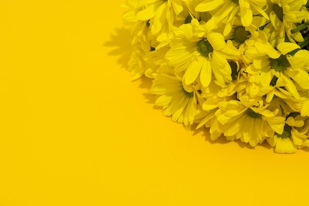 Yellow chrysanthemum bouquet on yellow background copy space