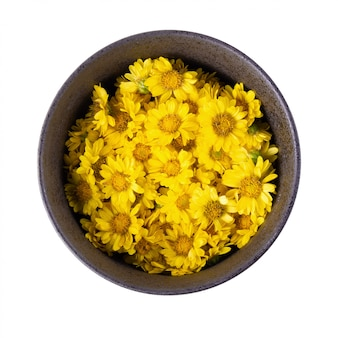 Yellow chrysanthemum flowers isolated on white background