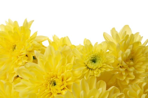 노란 국화 흰색 절연