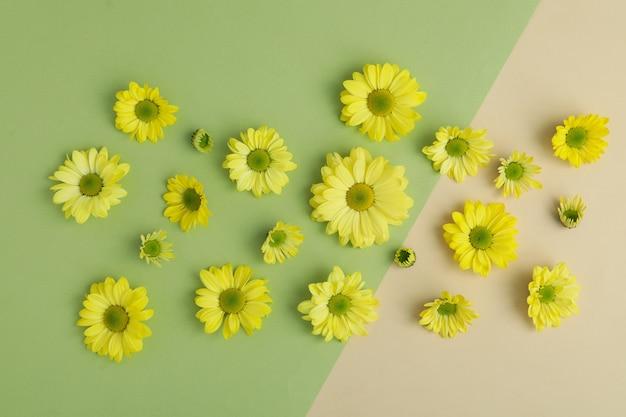 Желтые хризантемы на двухцветном фоне, вид сверху.