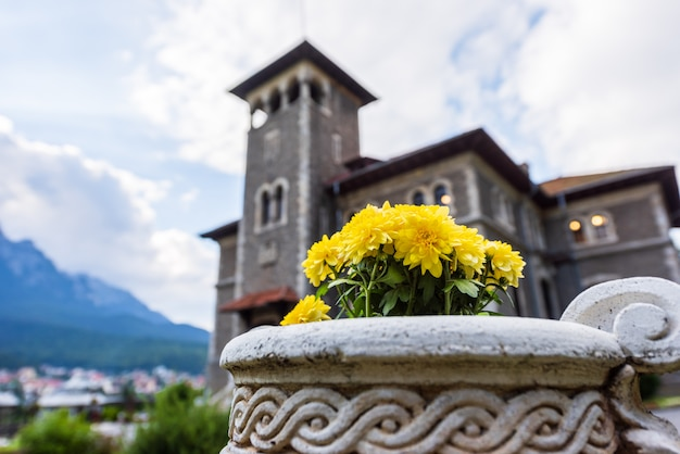 Yellow chrysanthemums in a stone vase in busteni