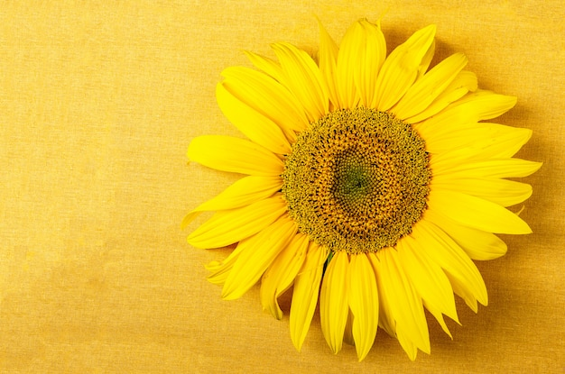 Yellow cloth with sunflower