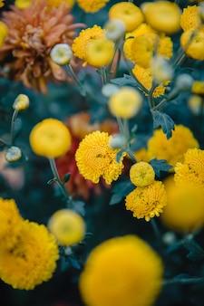 黄色いクラスターの花