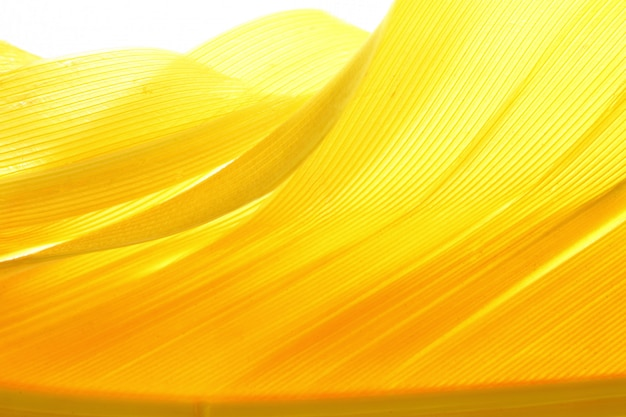 Yellow color feather