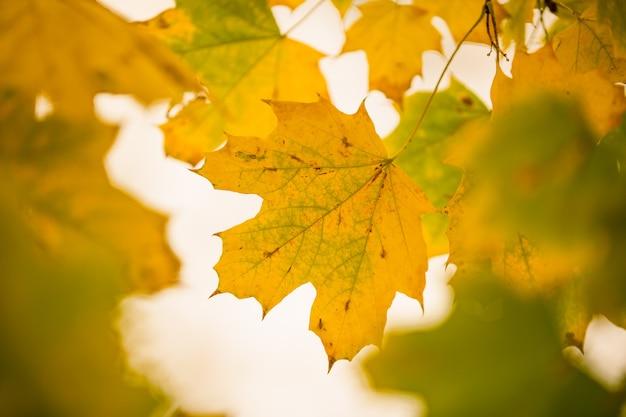 木の上に黄色い紅葉、秋の季節