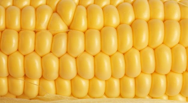 黄色のトウモロコシの穂軸のテクスチャ、フルフレーム