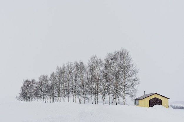Yellow cottage with row of trees during snowfall on winter day