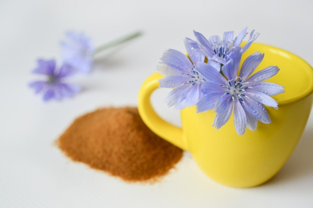 Yellow cup with chicory flowers, chicory powder