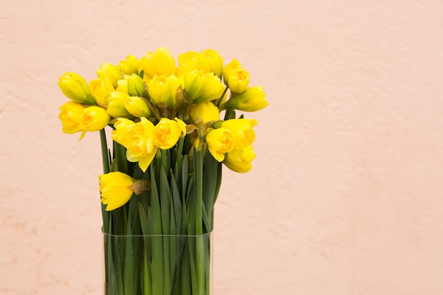 Yellow daffodils background