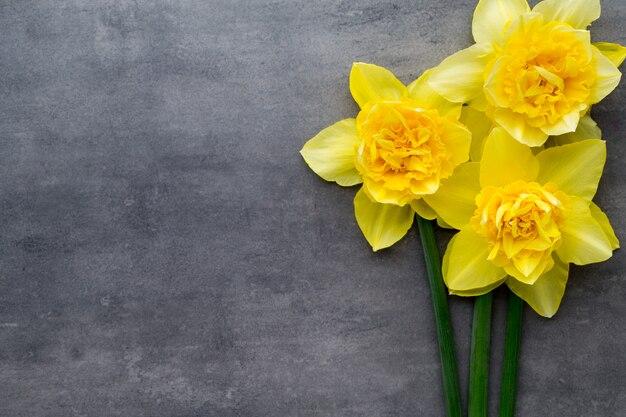 灰色の背景に黄色い水仙。イースターグリーティングカード。