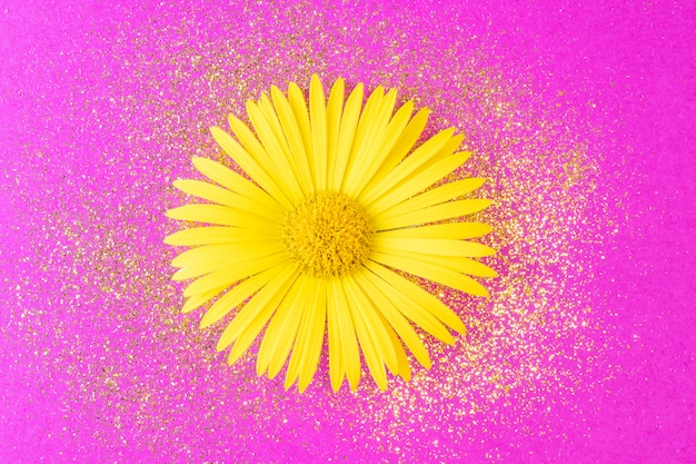 Yellow daisy with golden sparkles close-up on a bright pink background.