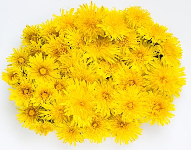 Yellow dandelion flowers background