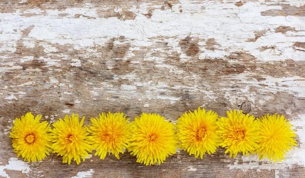 コピースペースのある白いライムの残骸が付いている古い木に一列に並んだ黄色のタンポポの花